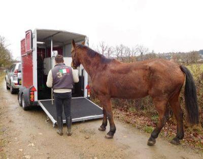 equitaxi une entreprise sp cialis e dans le transport animalier cheval ou autre animal domestique. Black Bedroom Furniture Sets. Home Design Ideas